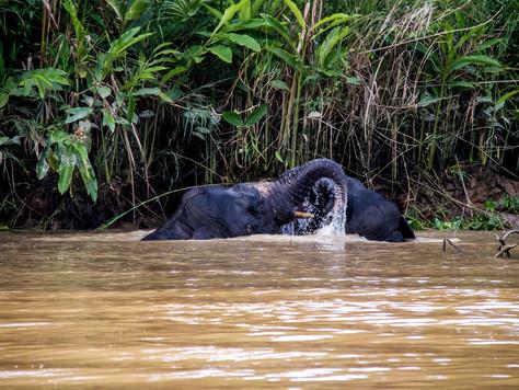 The WWF ADOPT AN ELEPHANT CAMPAIGN
