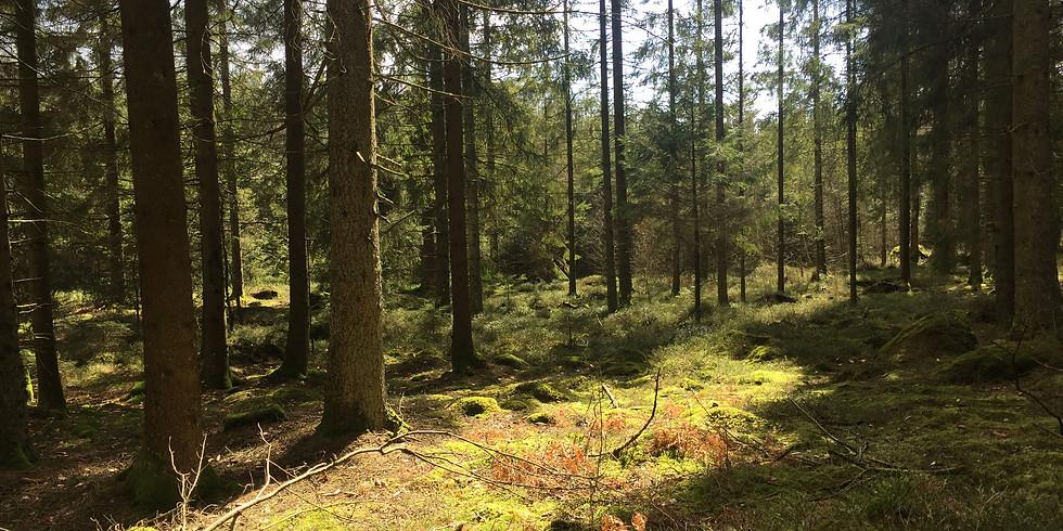Yogavandringshelg i storskogen