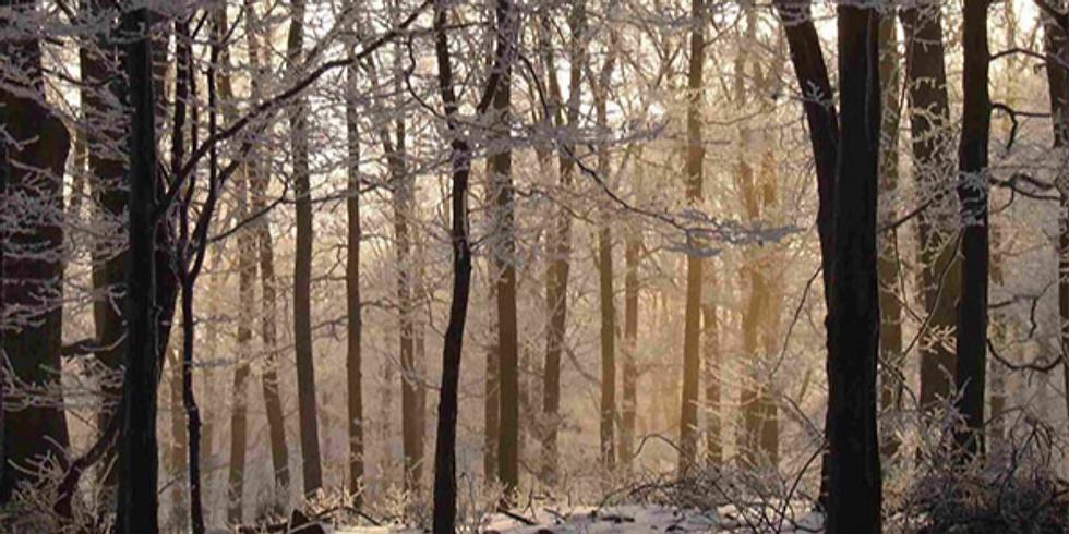 Vinteryogavandring