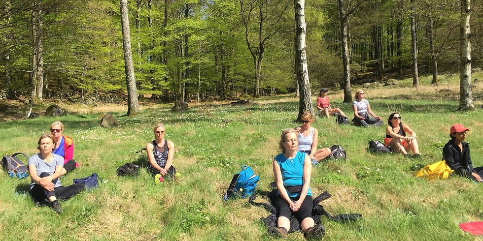 Yogavandringsdag i bokskogen