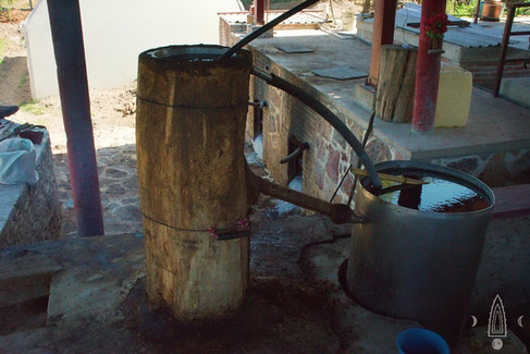 distillation tree trunk