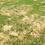 Thumbnail: Pet Lawn Green Up