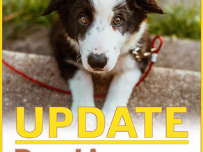 Dog Licenses Update!