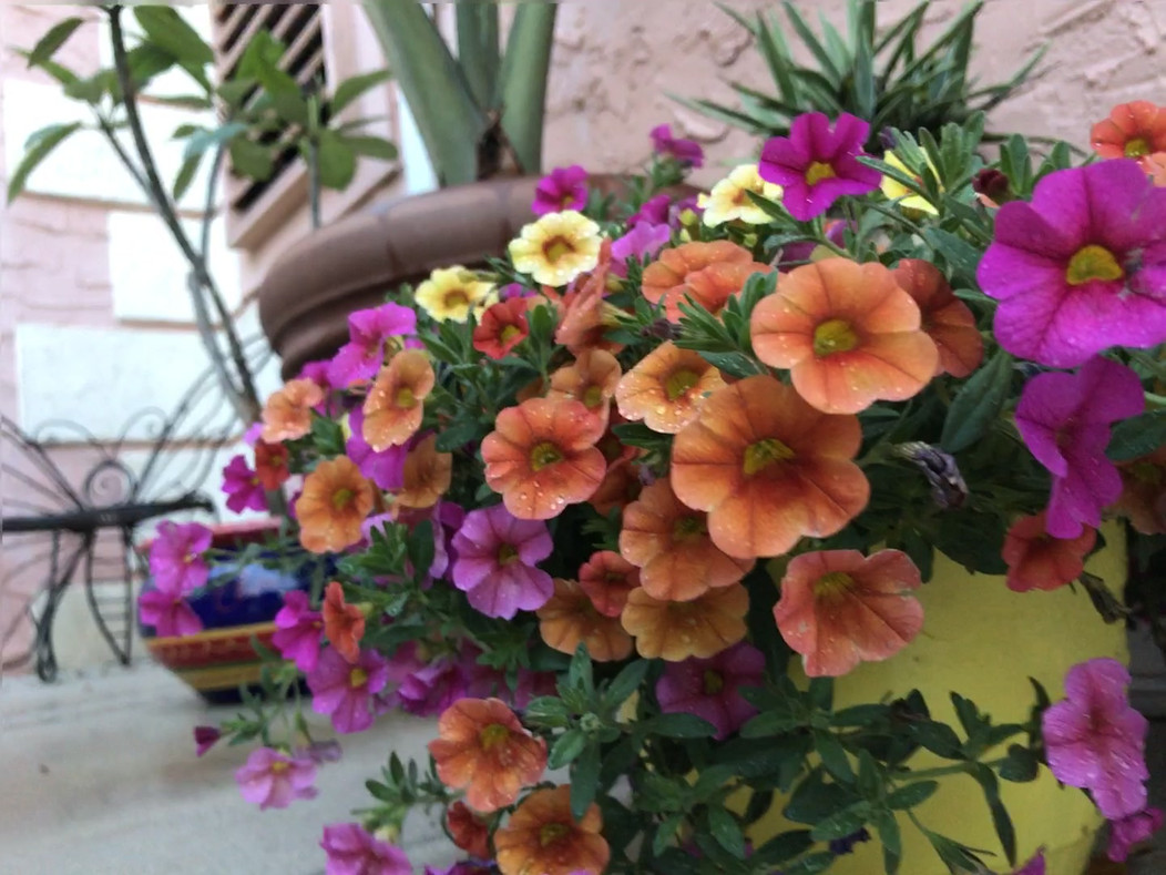 Flowers at Lala Hot Yoga Downtown Stuart