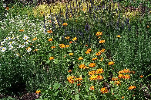 Wildflowers in Ireland