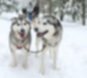 dog sled, dog sled ontario, dog sledding from toronto, snow tubing, winter canada