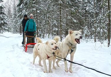 two peple are dog sledding