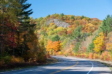 Fall colours on the trees in Algonquin.