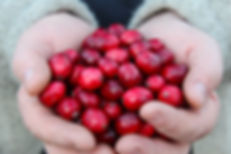 full hand of cranberries