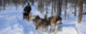 Dog Sledding through the woods