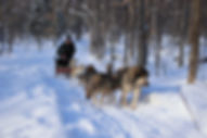 Couple of girls doing dogsledding