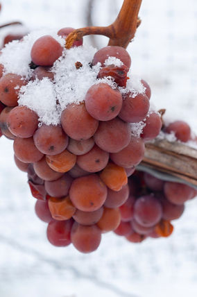 Frozen wine grapes