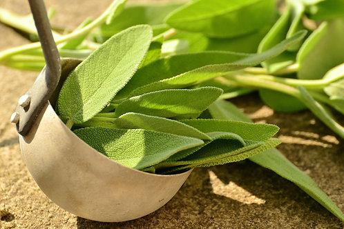 "Organic Sage 4"" Pot"
