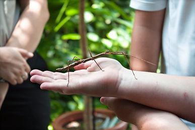 Holding Vietnamese Holding Stick