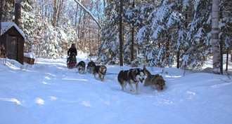Dog Sledding in the deep snow in North Ontario
