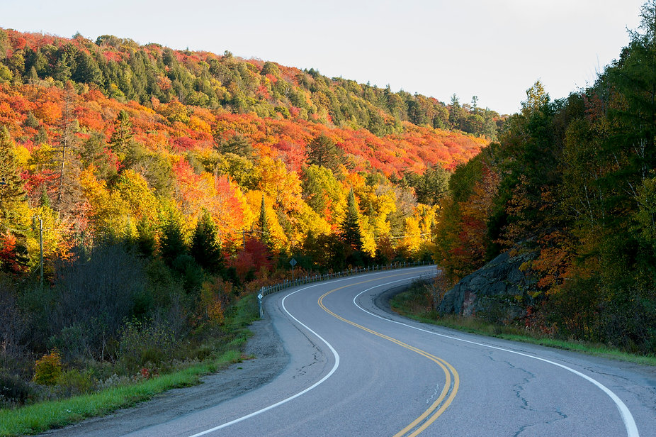 Road and Fall colours in Algonquin Park