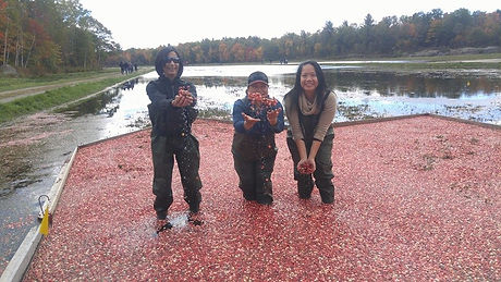 Group of friends standing in bog of cranberries at wine farm