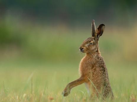 Of Ostara, hares and eggs