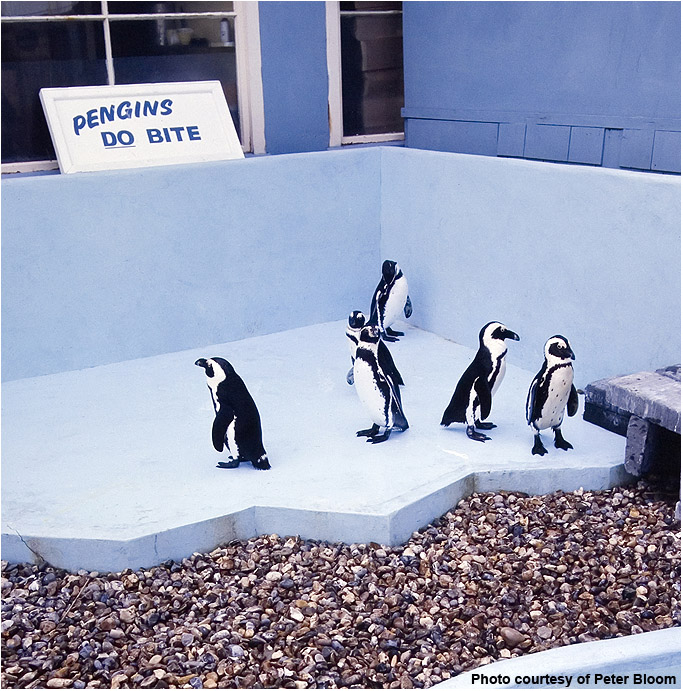 PENGUIN POOL
