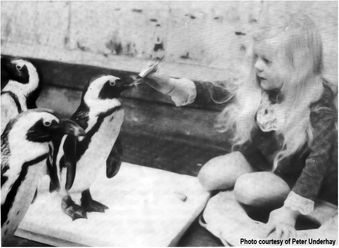 PENGUINS 1973