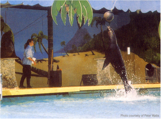 JUMPING SEA LION