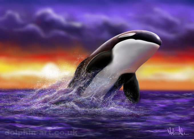Whale Serenity