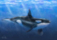 Orca-Love-FrontPage.jpg