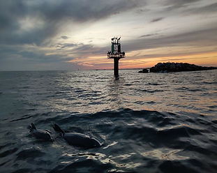 sunset&dolphinsJetty.jpg