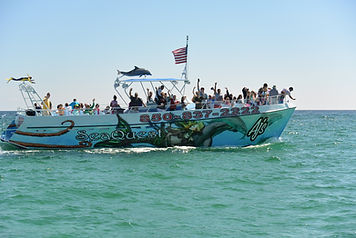 Destin Fl Dolphin Cruises