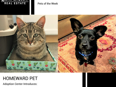 Furry Friends Friday Pet of the Week! January 15, 2021