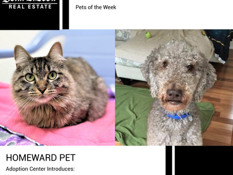 Furry Friends Friday Pet of the Week! February 19, 2021