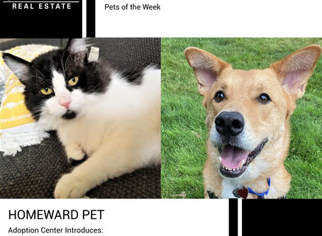 Furry Friends Friday Pet of the Week! October 25, 2020