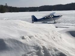 Winter Fly In