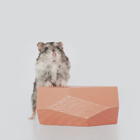 Tofu copy.jpg