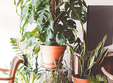 Chemical-free ways to purify the air in your home