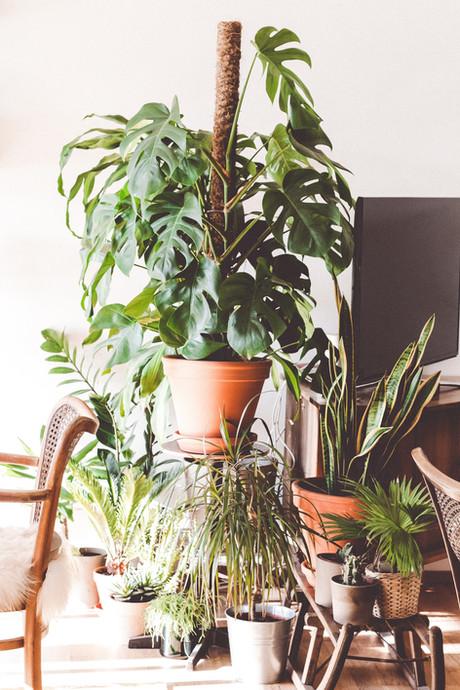 fleuriste plante