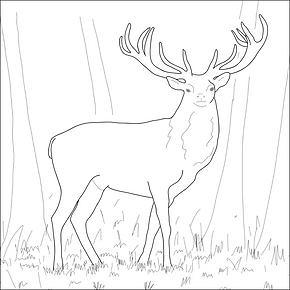 Karnoss stag
