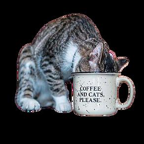 1452568_web1_gtr-liv-catcafe2-072419-rem