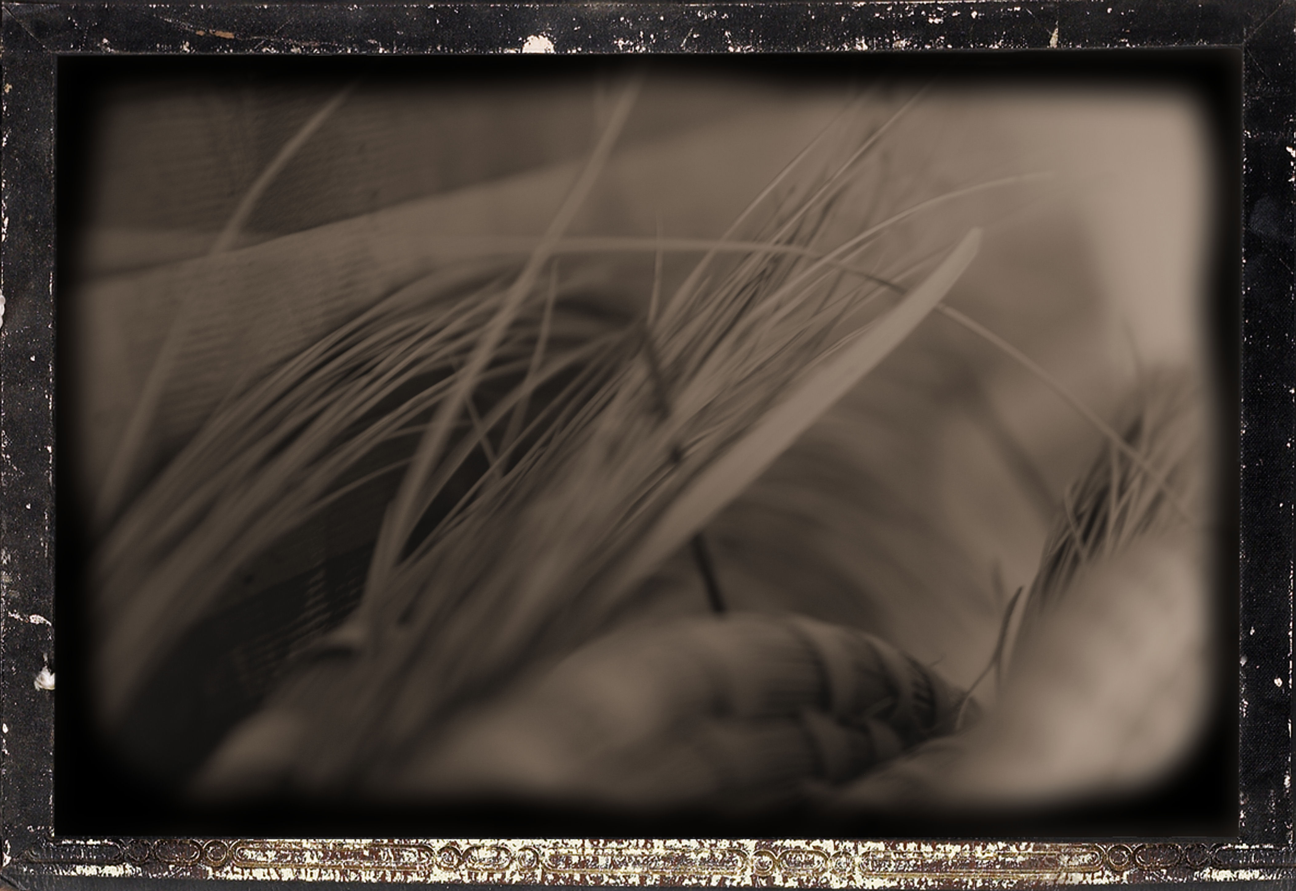 Sweetgrass 3