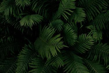 ZWN fern image(RGB).jpg