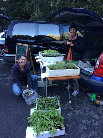 For website - Taranaki seed savers.jpg