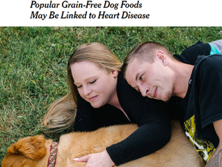 Dear New York Times and Washington Post, Grain Free Diets DON'T Break Hearts--Meat Free Diets DO