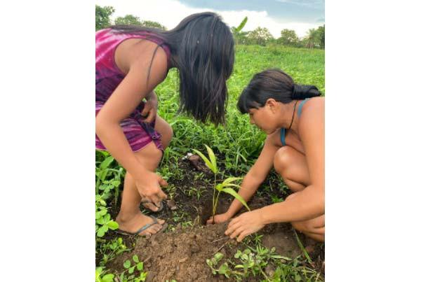 Kamayura Village. Each interested family received 65 fruit plant seedlings.
