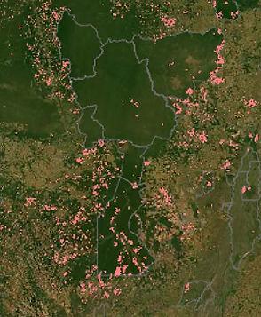 afv_forest_deforestation.jpg
