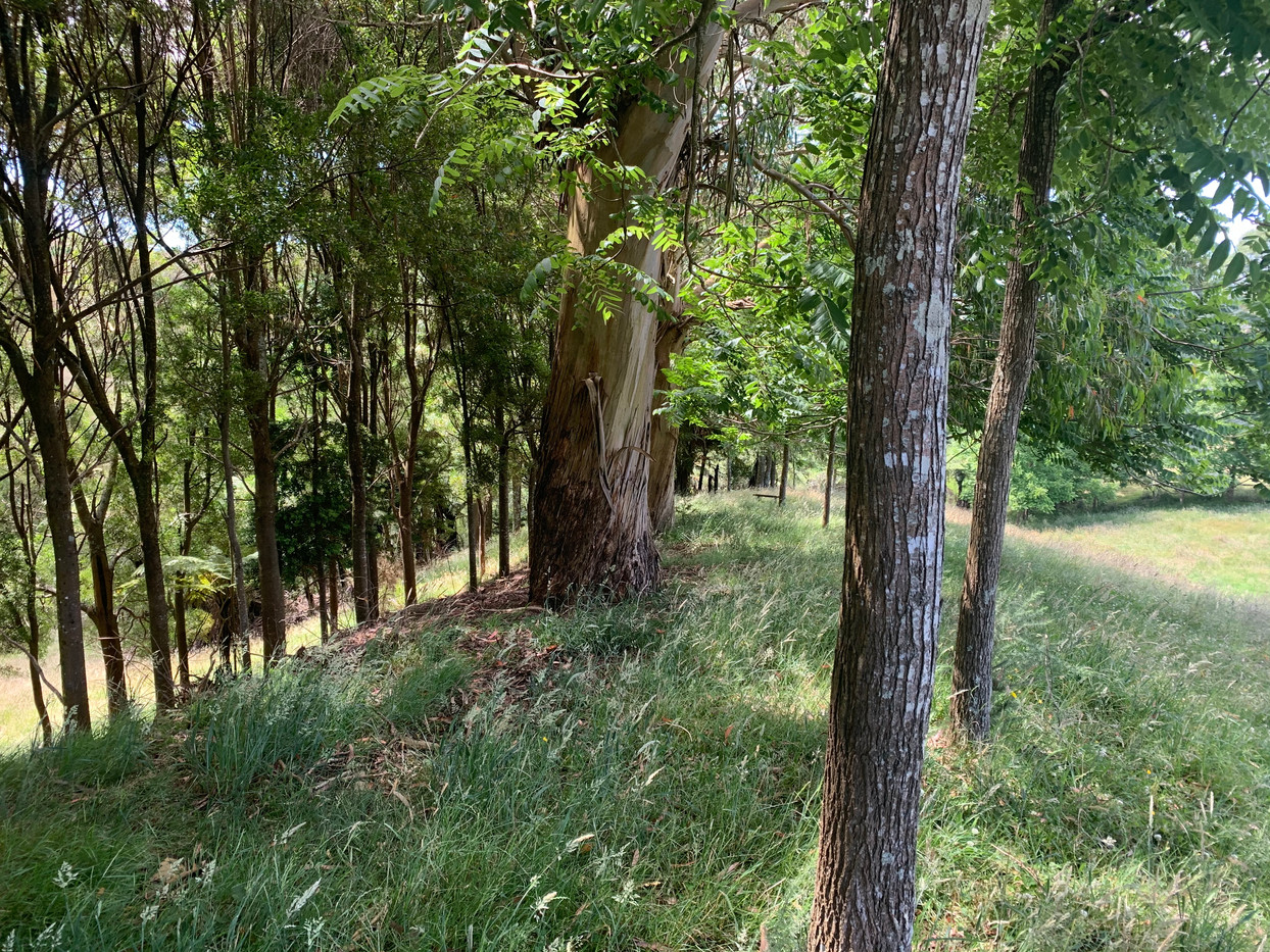 Forested area on the property