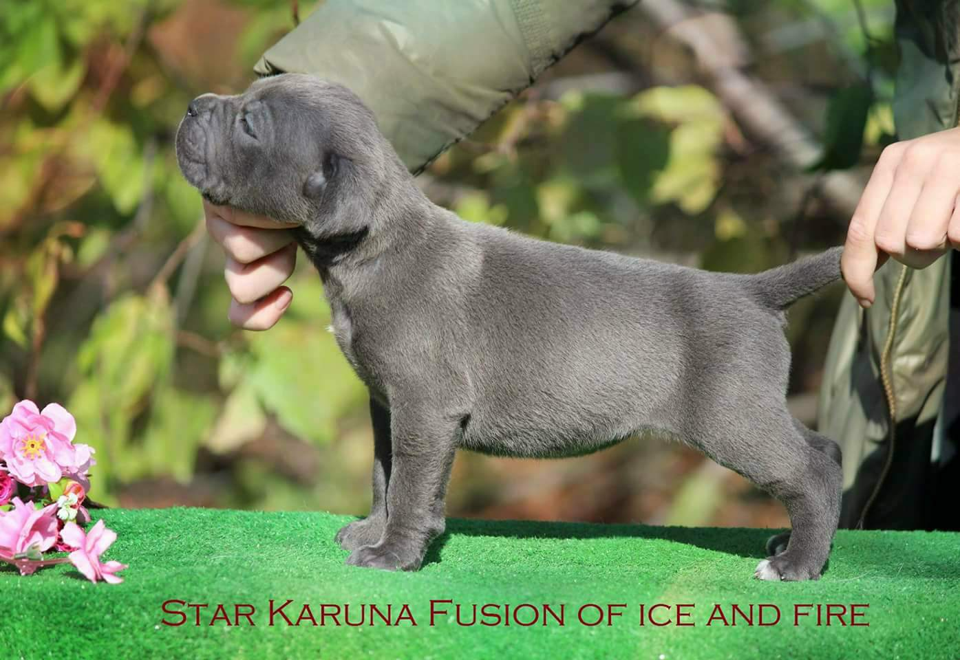 Star Karuna  Fusion Ice and Fire