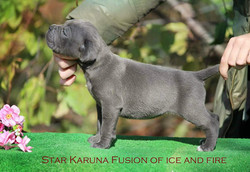 Star Karuna  Fusion Ice and Fire