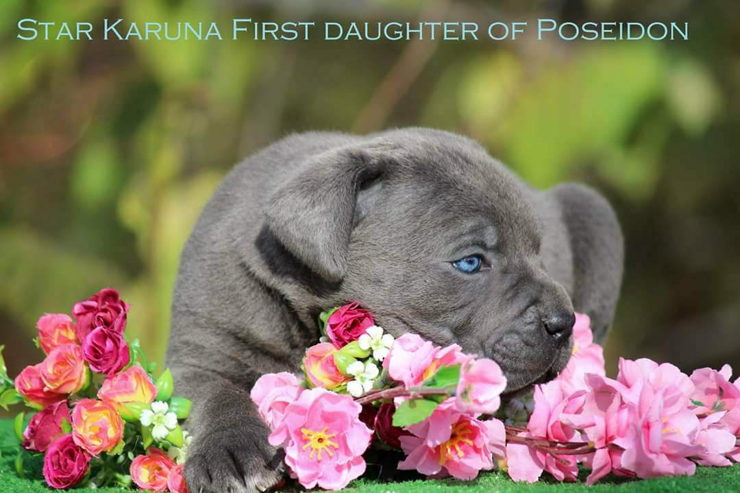 Star Karuna  First Daughter of Posedon