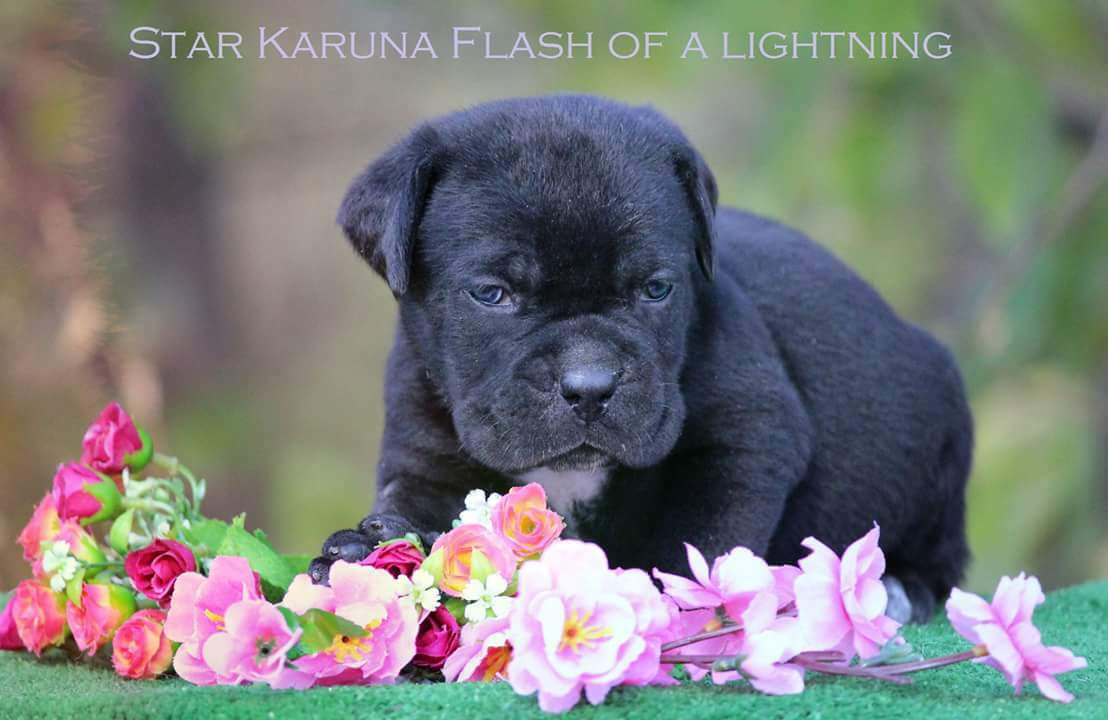 Star Karuna Flash of a Lightning