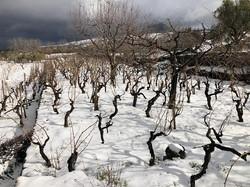 snow vineyard